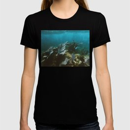 Mexican Caribbean Sealife T-shirt