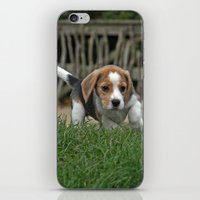 puppies iPhone & iPod Skins featuring Beagle puppies by Martina Berg