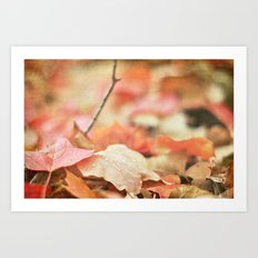 Forest Floor in Autumn Art Print