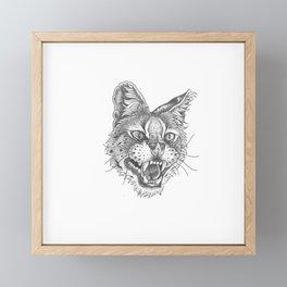 Angry caracal Framed Mini Art Print