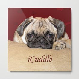 Adorable iCuddle Pug Puppy Metal Print