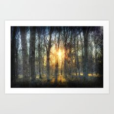 Early Morning Forest Art Art Print