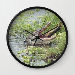 Alligator eating a large fish in Florida lake Wall Clock