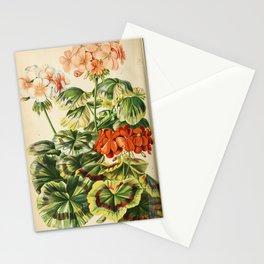 Flower pelargonium zonale 2 Stationery Cards