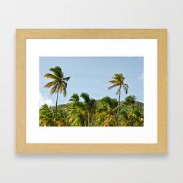 Palm Trees Pt. 4 Framed Art Print