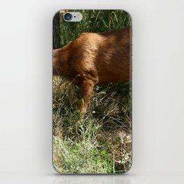 Mule Deer At Zion Park iPhone Skin