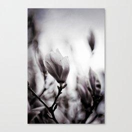 Flower Of The Aquitane Canvas Print
