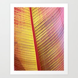Maurelli Natural Banana Tree Leaf Art Print