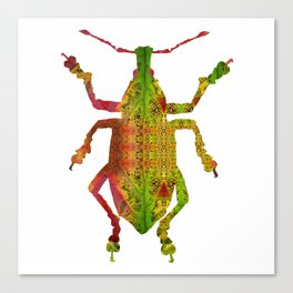 PhotoSynthesis/Weevil Canvas Print