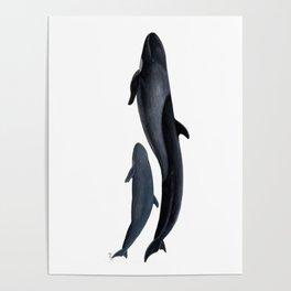 False killer whale Poster