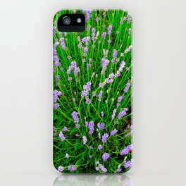 Lavender Close Up iPhone Case