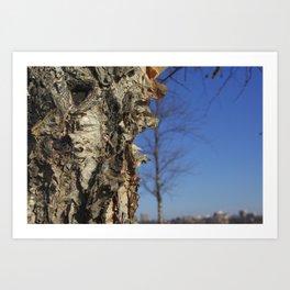 River Birch Bark up against the blues Art Print