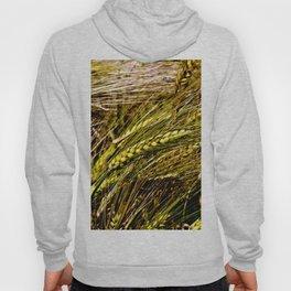 Golden Wheat Field Hoody