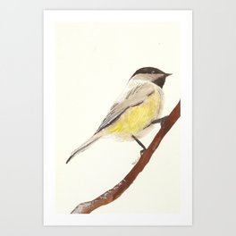 Winter Birds- Chickadee  Art Print