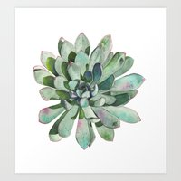 succulent Art Prints featuring Succulent by LouiseDemasi