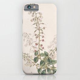 Flower 006 lysimachia lobelioides Lobelia like Loose strife25 iPhone Case