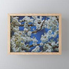 Sakura, cherry white blossom with blue background in Paris - Fine Arts Travel Photography Framed Mini Art Print