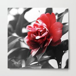 Red White Flower Close Up Metal Print