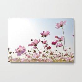 Pink Cosmos Metal Print