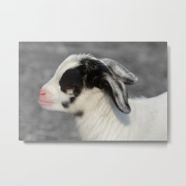 The Baby Goat Metal Print