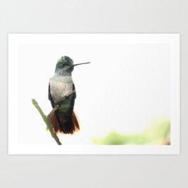 Hummingbird Neighbor Art Print