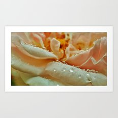 Rainy Rose Art Print