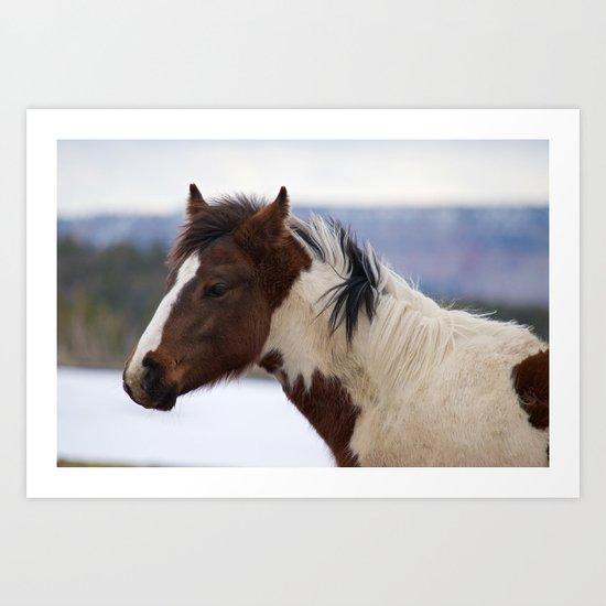 Tri-Colored Horse Art Print