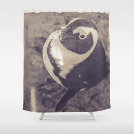 Adorable African Penguin Series 3 of 4 Shower Curtain