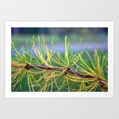 Needles Art Print