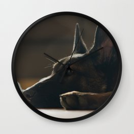 Play break of a Malinois Wall Clock