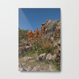 Desert Wildflowers & Cacti in Spring Metal Print