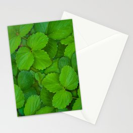Holy Basil Tulsi Green Mint Leaves Stationery Cards