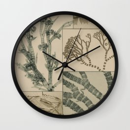 Patterns In Nature Wall Clock