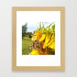 SunFlower Fly Framed Art Print