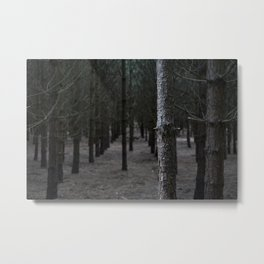 In Formby Woods Metal Print