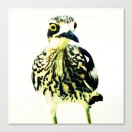 Curlew Bird Canvas Print