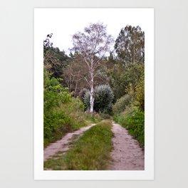 AUTUMNAL BIRCH FOREST Art Print