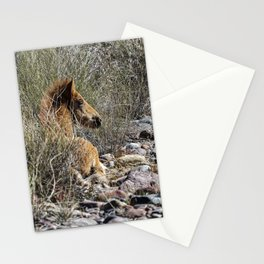 Salt River Foal Finding A Spot to Rest Stationery Cards