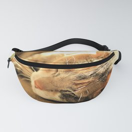 Sleepy Kitty Pretty Kitty by Reay of Light Fanny Pack
