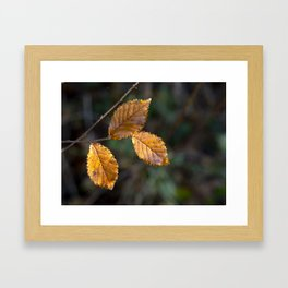 Leaves in Light Framed Art Print