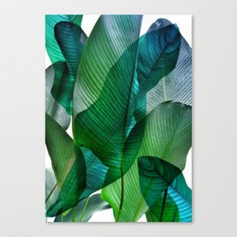 Palm leaf jungle Bali banana palm frond greens Canvas Print