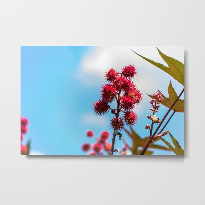 Reminisce of Rambutan Metal Print