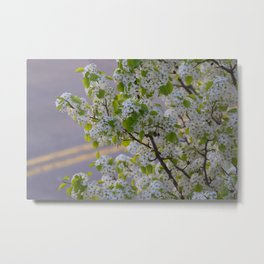 Blossoms on Third Avenue Metal Print