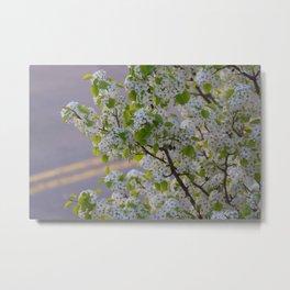 Blossoms on Third Avenue Metal Print