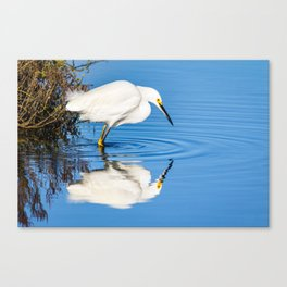 Snowy Egret Reflection at Bolsa Chica Ecological Reserve in Huntington Beach, California Canvas Print
