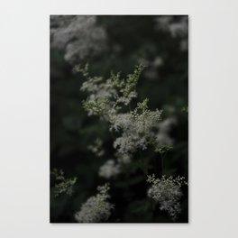 Soft as a Whisper Canvas Print
