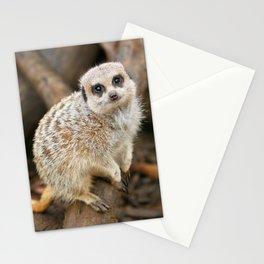Cute Meerkat looking at camera Stationery Cards