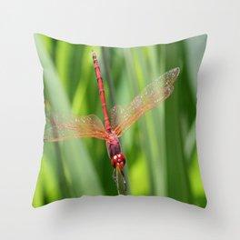Closeup of Red Skimmer or Firecracker Dragonfly Throw Pillow