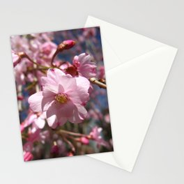 Perfect - Pink Cherry Blossom Stationery Cards