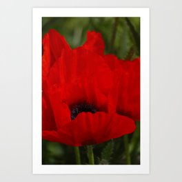 poppy -6- Art Print